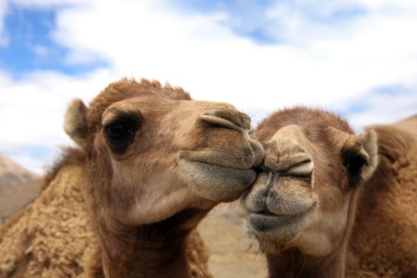 kamelhaardecke-reinigen-DPI_72